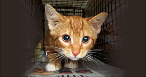TCAP_Web_Subpage_Category_Feral