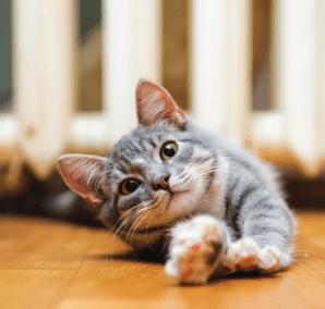 Kitten Start Eating Solid Food