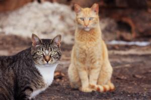 Feral Cat 3